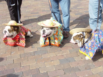 Bulldogs dressed as the Three Amigos.