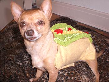 Anna's dog, Sophie