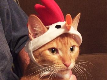 Liz's cat, Phillip