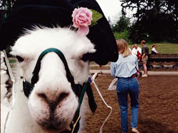 Tina's pet llama, Kokane