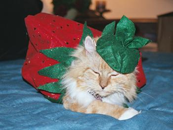 Trisha's cat