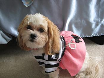 Erica's dog, Sugar