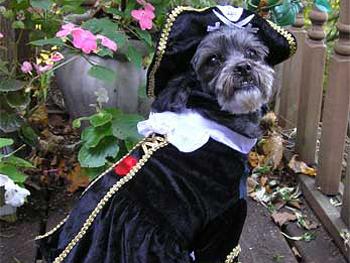 Lisa's dog, Izzy