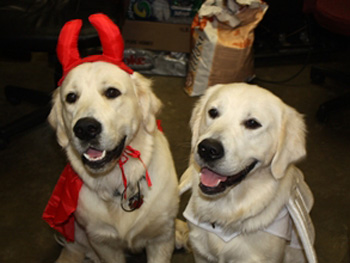 Dogs dressed as a devil and an angel