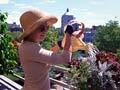 Woman watering rooftop garden