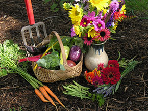 Organic vegetables and flowers