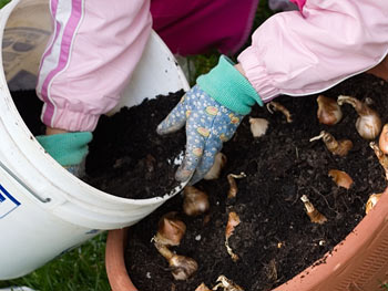 Woman preparing spring flower bulbs in soil