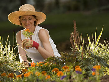 Woman planting orange flowers