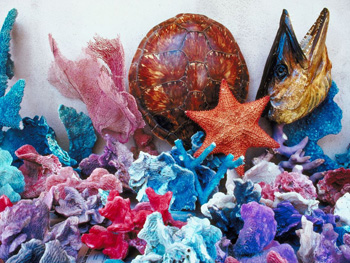 A display of coral