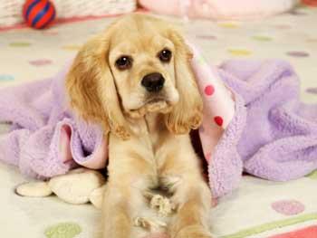 Sadie and blankets