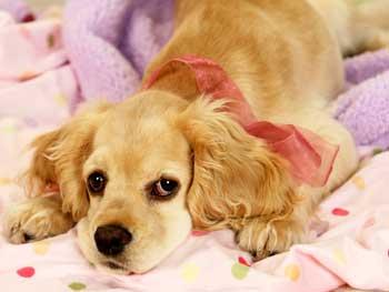 Sadie poses on the blanket