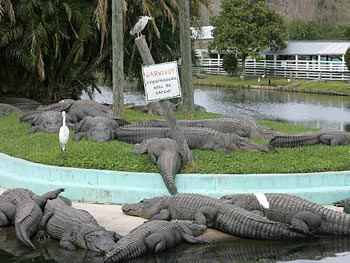 Gatorland in Florida