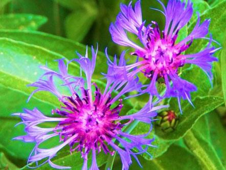Purple Flower Picture on Breathing Space   June 2009   Oprah Com