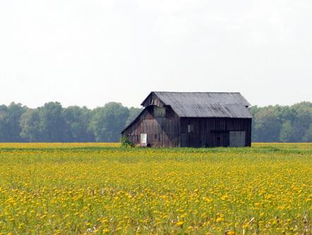 Field in Sullivan, Illinois