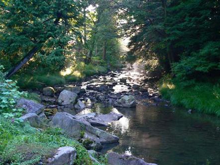 River in Allegany, New York