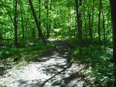 Walking path in the woods of Chateauguay, Quebec