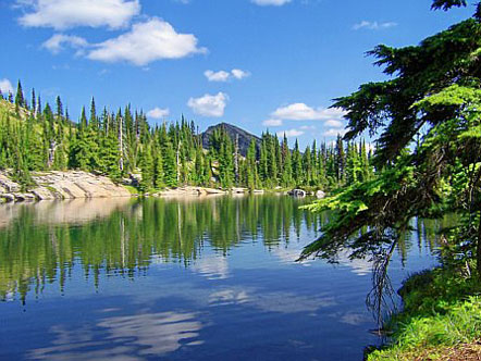 Lake surrounded by forest