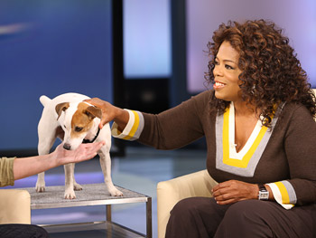 Maggie, the counting dog, and Oprah