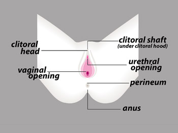 Dr. Laura Berman explains the external view of the female anatomy