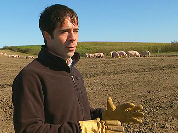 Jude Becker's organic pig farm
