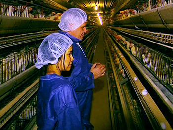 Lisa and John Baker visit a conventional egg farm.