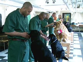 Puppies Behind Bars program at Fishkill Correctional Facility