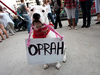 Dog holding Oprah sign