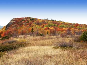 Fall foliage at Brockway Mountain