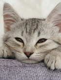 Cat myths