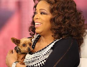 Oprah and a Yorkie rescued from a puppy mill