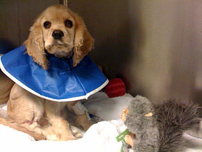 Oprah's dog Sadie is getting better after a bout of parvo.