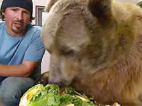 Why Brutus the Bear doesn't hibernate