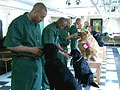 Inmates puppies