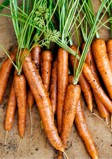 Organic carrots help save the world